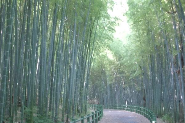 竹の小径の風景